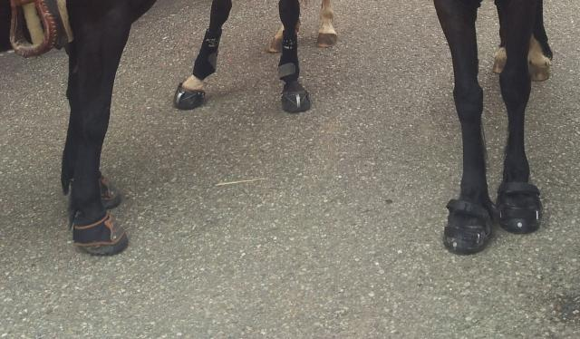3 different horses with 3 different boots, but all walked awesome on our 6 hour ride