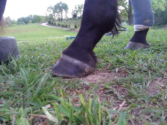 Rehabilative Left Front Foot