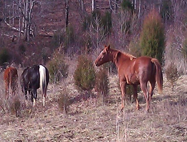 Some of the horses, 12_2011
