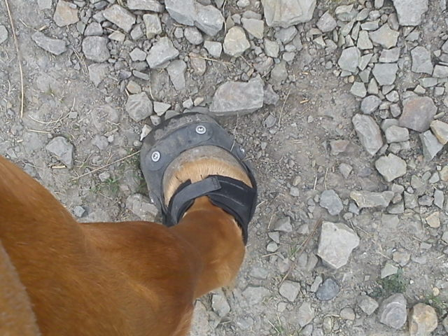 Many of the tracks are littered with stones like this, hoofboots are essential!