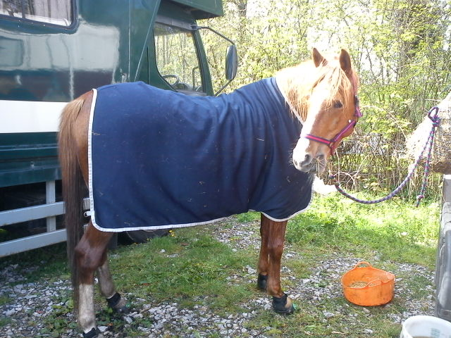 Looey relaxing after his first competition of 2012