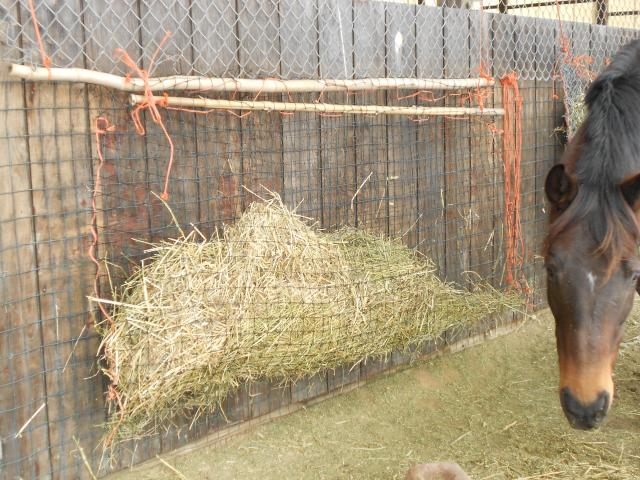 The Large Slow Feeding Hay Pocket