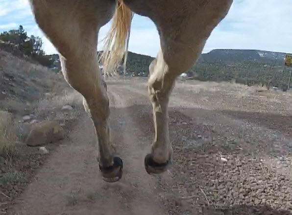 Girth Cam: Cantering in Easyboot Gloves