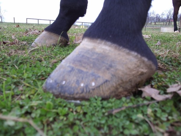 2009 Front Hooves