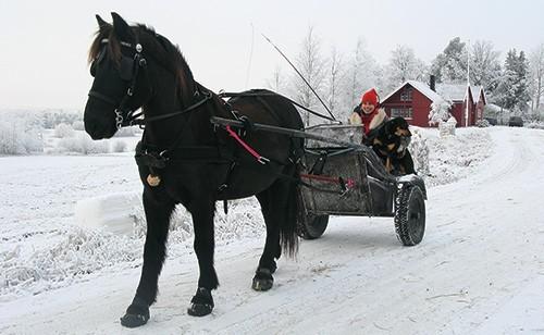Edda Bohn, Norway, driving in Epics