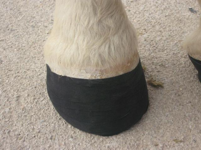 Hoof with athletic tape