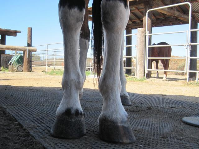 Trimming the Toed-Out or Toed-In Foot - EasyCare Hoof Boot News