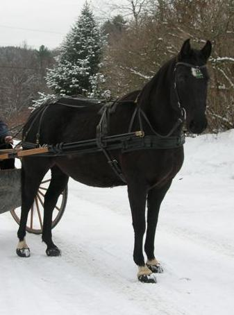 Jenny Bertrum's horse