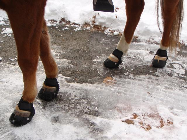 All 4 Hooves Booted - On Ice