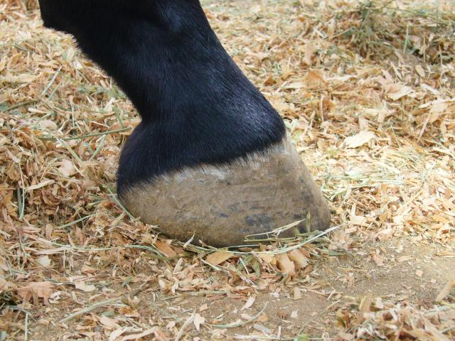 Kona's Perfect Hoof