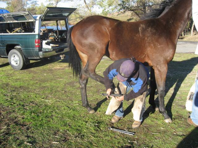 Tim works on and 18 month old colt