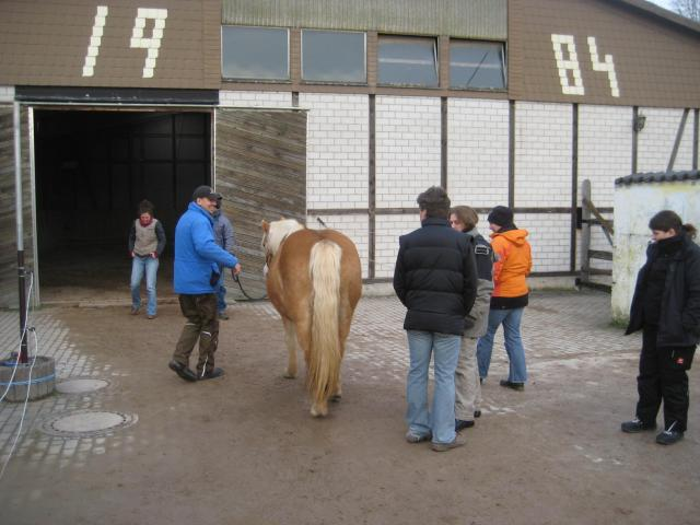 Horses and participants getting ready for demonstration