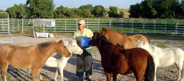 Gail Snyder shown with some of her 4 hooved clients. Photo courtesy Gail Snyder