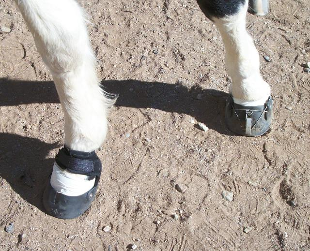 Booted for Riding