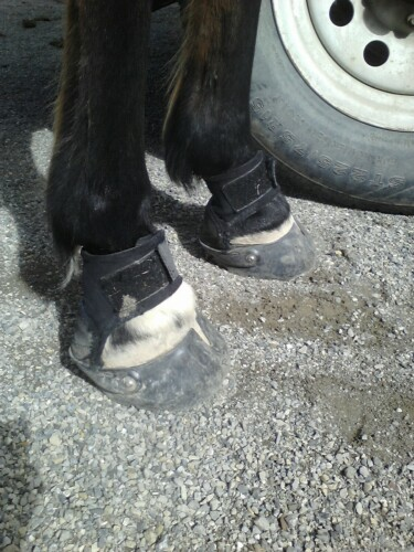 glove boots