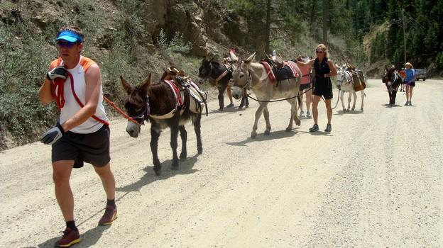 burro racing in Colorado
