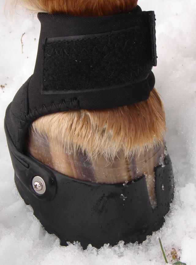 Right Front Hoof - Size 2 Boot