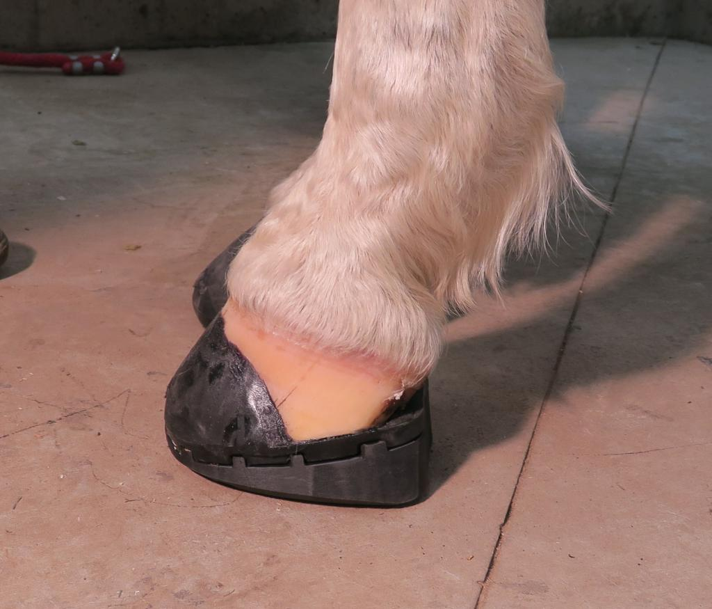 e4ec9119d536fa Flip Flop  Frequently Asked Questions - EasyCare Hoof Boot News