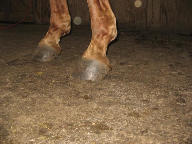 A gelding in high heels is not a pretty site.