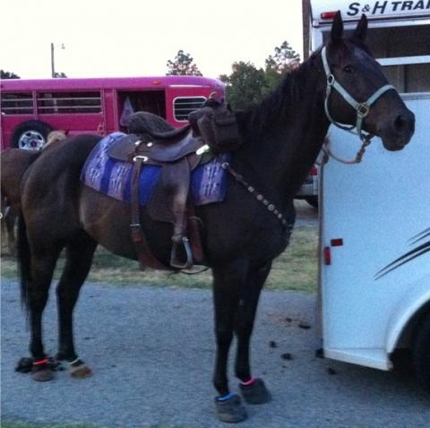 Boa Horse Boots