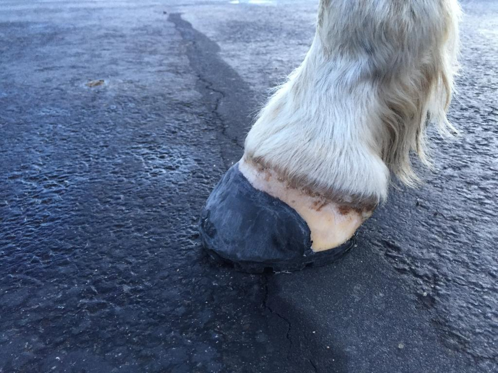 3f2f9b884d14eb Another hot new item to be viewed was the new Easyboot Mini Horse Boot.  Everybody loved this new boot. Garrett Ford wrote a nice blog about this  new boot