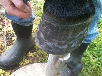 a thorough rasping of a very clean hoof