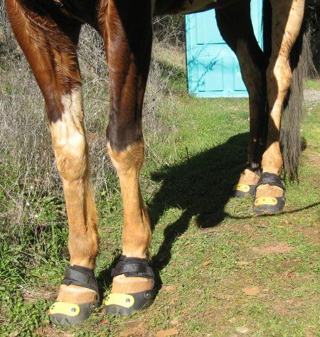 Horse B - Uno