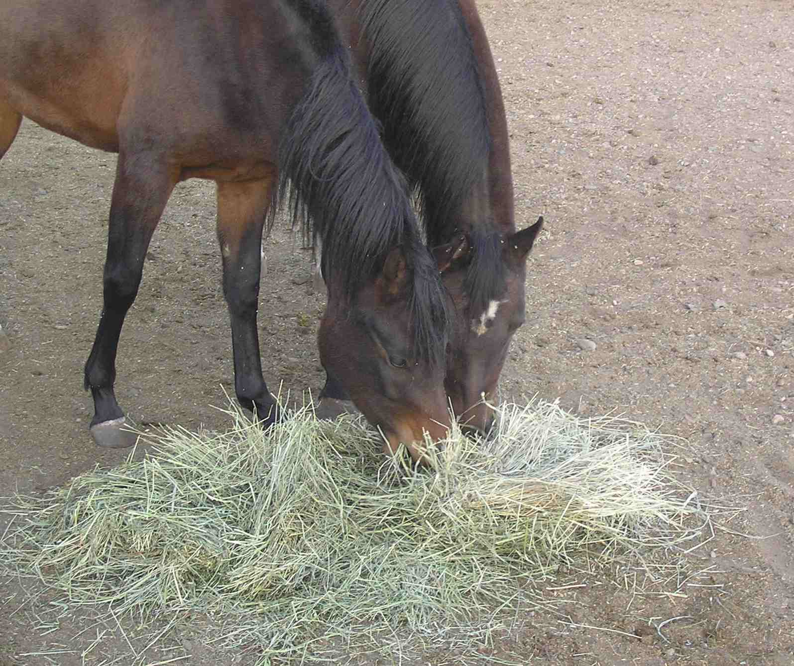 horses and hay