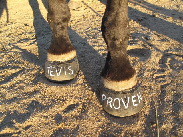 Tevis success in Easyboots