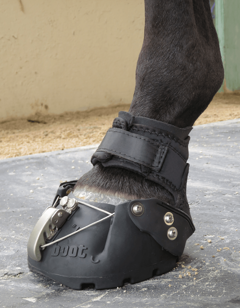 DE Hoof Taps with Easyboot Epic
