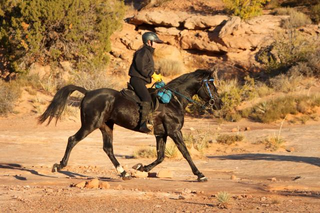 TAR Pistol Pete and me at an endurance ride. Photo by Karl Creations.