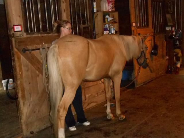 Emily working on her new horse, Koda