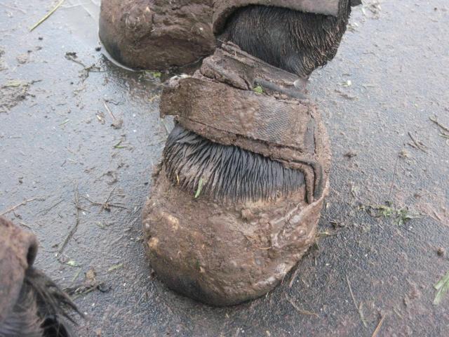 muddy glove boot