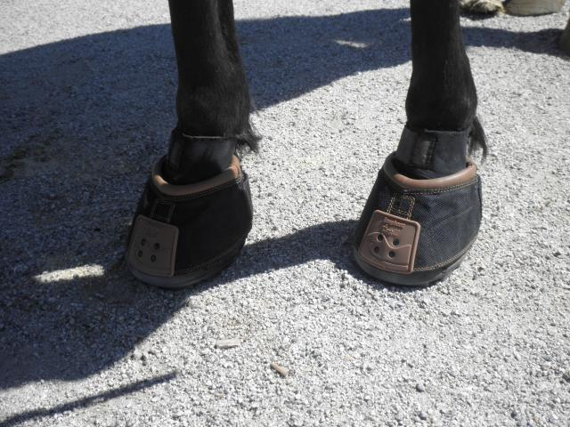 Our three-hour trail ride finally came to an end. As I removed the Easyboot  Trails from my horse 72a63e8b28ef5