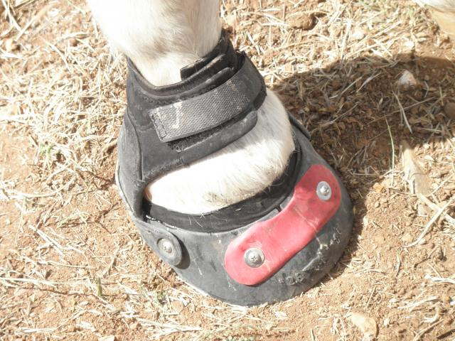 Jersey's completed hoof.