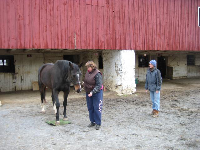 Tessa's first ground tying lesson.