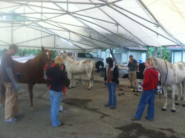Gluing Easyboots at Gold Country Fairgrounds