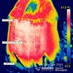 Barefoot Hoof Thermography Image