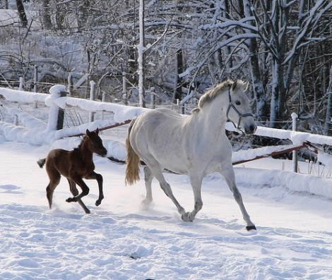 mare and foal in snow